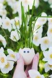 Αστείο ρύγχος eggshell και της χλόης στοκ εικόνες