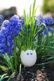 Αστείο ρύγχος eggshell και της χλόης στοκ εικόνα