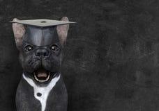 Αστείο σκυλί δασκάλων, εκπαίδευση, πίνακας κιμωλίας, εκμάθηση στοκ φωτογραφία