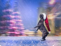 Αστείο σκυλί που στέκεται στα οπίσθια πόδια Στοκ Φωτογραφία