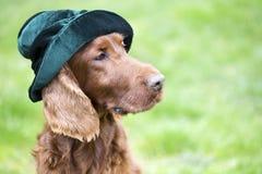 Αστείο σκυλί που φορά ένα πράσινο καπέλο Στοκ φωτογραφία με δικαίωμα ελεύθερης χρήσης