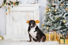 Αστείο σκυλί που φορά τα ελαφόκερες που θέτουν στο εσωτερικό για τα Χριστούγεννα Στοκ φωτογραφία με δικαίωμα ελεύθερης χρήσης