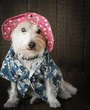 Αστείο σκυλί που φορά το καπέλο στοκ φωτογραφία με δικαίωμα ελεύθερης χρήσης