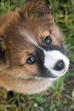 Αστείο σκυλί κουταβιών Στοκ Εικόνα