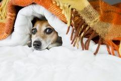 Αστείο στηργμένος ρύγχος σκυλιών Στοκ Εικόνες