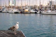 Αστείο seagull που εξετάζει τη κάμερα με τα θολωμένα γιοτ στο υπόβαθρο - εικόνα στοκ φωτογραφίες με δικαίωμα ελεύθερης χρήσης