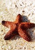 αστερίας ακτών Στοκ Εικόνα