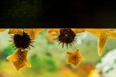 Αστερίας και αχινός στο ενυδρείο τοίχων στοκ φωτογραφίες