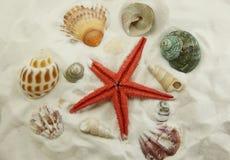 Αστερίας και θαλασσινά κοχύλια Στοκ Εικόνες
