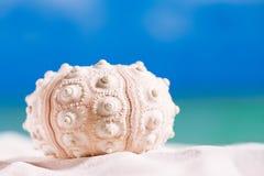 Αστερίας κοχυλιών σκανταλιάρικων παιδιών με τον ωκεανό, στην άσπρη παραλία άμμου Στοκ Φωτογραφίες