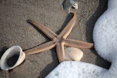 αστερίας κοχυλιών Στοκ εικόνες με δικαίωμα ελεύθερης χρήσης