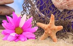 αστερίας λουλουδιών Στοκ Φωτογραφίες