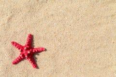 Αστερίας με την άμμο ως υπόβαθρο Στοκ εικόνες με δικαίωμα ελεύθερης χρήσης