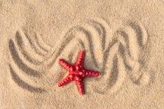 Αστερίας με την άμμο ως υπόβαθρο Στοκ εικόνα με δικαίωμα ελεύθερης χρήσης