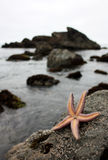 Αστερίας που κυματίζει γεια Στοκ εικόνες με δικαίωμα ελεύθερης χρήσης