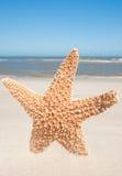 Αστερίας που στέκεται στην άμμο Στοκ Εικόνες