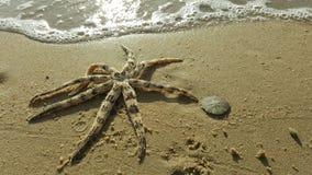Αστερίας στην άμμο παραλιών Στοκ Εικόνα