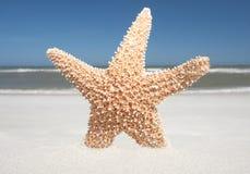 Αστερίας στην άμμο Στοκ Φωτογραφίες