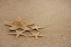 Αστερίας στην άμμο στοκ εικόνες