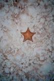 Αστερίας στην άμμο Στοκ εικόνα με δικαίωμα ελεύθερης χρήσης