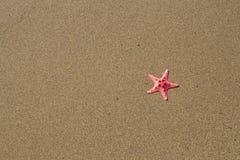 Αστερίας στην άμμο Στοκ φωτογραφία με δικαίωμα ελεύθερης χρήσης
