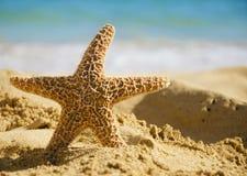 Αστερίας στην αμμώδη παραλία Στοκ Φωτογραφίες