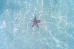 Αστερίας στην παραλία, μνήμες διακοπών Στοκ Εικόνα