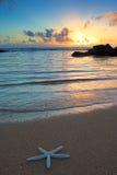 Αστερίας στην παραλία στο ηλιοβασίλεμα, Kauai Στοκ εικόνες με δικαίωμα ελεύθερης χρήσης