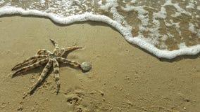 Αστερίας στην παραλία Στοκ Φωτογραφίες