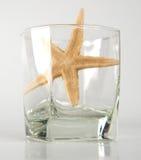 Αστερίας στο γυαλί Στοκ Φωτογραφία