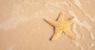 Αστερίας στο κινούμενο ωκεάνιο ύδωρ Στοκ Φωτογραφία