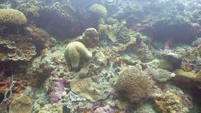 Αστερίας στο κοράλλι Στοκ Φωτογραφίες