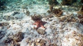 Αστερίας στο κοράλλι Στοκ εικόνα με δικαίωμα ελεύθερης χρήσης