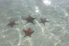 Αστερίας στο νερό στοκ φωτογραφίες με δικαίωμα ελεύθερης χρήσης