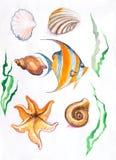 Αστερίας φυκιών, watercolor ψαριών κοχυλιών ελεύθερη απεικόνιση δικαιώματος