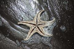 αστερίας Στοκ εικόνες με δικαίωμα ελεύθερης χρήσης