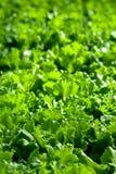 Αστική γεωργία, αστική καλλιέργεια, ή αστική κηπουρική Στοκ εικόνα με δικαίωμα ελεύθερης χρήσης