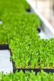 Αστική γεωργία, αστική καλλιέργεια, ή αστική κηπουρική Στοκ εικόνες με δικαίωμα ελεύθερης χρήσης