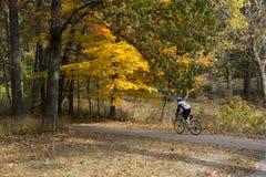 Αστικό δάσος Bicyclist το φθινόπωρο του Μίτσιγκαν Στοκ Εικόνες