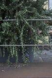 Αστικό παράδειγμα κήπων στοκ εικόνα με δικαίωμα ελεύθερης χρήσης