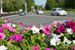 Αστικό υπόβαθρο με τα λουλούδια και το δρόμο Στοκ εικόνες με δικαίωμα ελεύθερης χρήσης