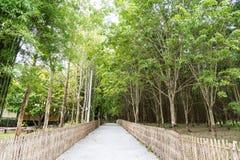 λαστιχένιο δέντρο φυτειών Στοκ εικόνες με δικαίωμα ελεύθερης χρήσης