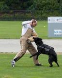 αστυνομία σκυλιών ανταγ&om Στοκ εικόνα με δικαίωμα ελεύθερης χρήσης