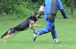 αστυνομία σκυλιών Στοκ φωτογραφία με δικαίωμα ελεύθερης χρήσης