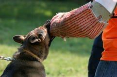 αστυνομία σκυλιών Στοκ Φωτογραφίες