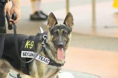 αστυνομία σκυλιών Στοκ εικόνα με δικαίωμα ελεύθερης χρήσης