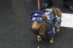 αστυνομία σκυλιών Στοκ Εικόνα