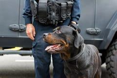 Αστυνομικός και πίσω σκυλί στο καθήκον Στοκ εικόνα με δικαίωμα ελεύθερης χρήσης