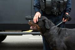 Αστυνομικός που κτυπά ελαφρά ένα σκυλί αστυνομίας Στοκ Εικόνα