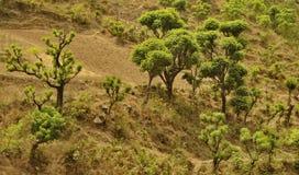 Ασυνήθιστα δέντρα στοκ εικόνες με δικαίωμα ελεύθερης χρήσης